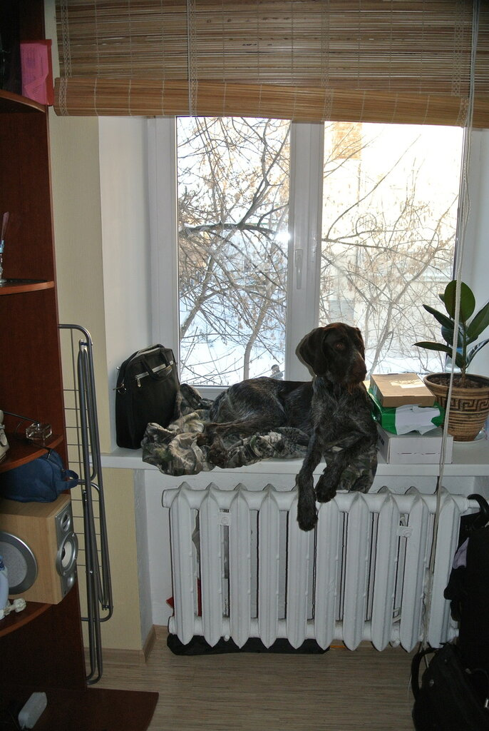 http://img-fotki.yandex.ru/get/4117/13756627.d/0_a8c5b_cfe82b80_XXL.jpeg