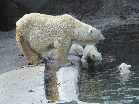 Москву лишат зоопарка