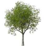 GC_EF_tree_1.png