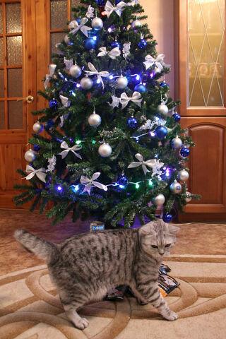 http://img-fotki.yandex.ru/get/4117/176414878.2/0_ac2f5_836f5dd2_L.jpg