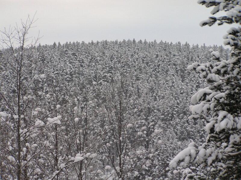 И снова снег, снег, снег... (02.04.2013)