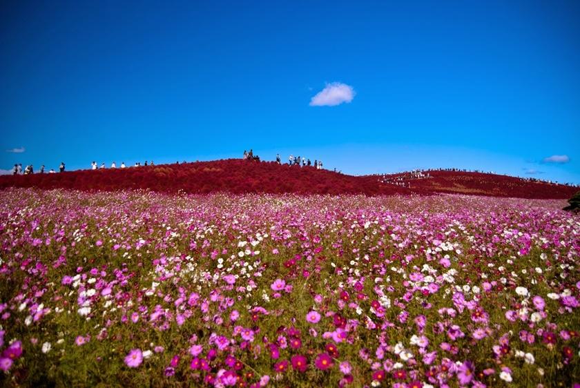 Живописный японский парк Хитати Кайхин 0 1422f2 ab09f45f orig
