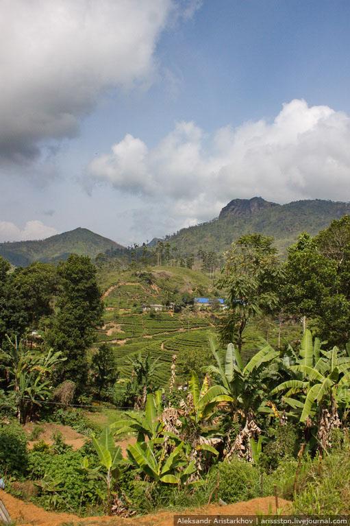 Шри-Ланка_Как угнать поезд_16