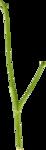 ldw_scc_el-branch-green.png