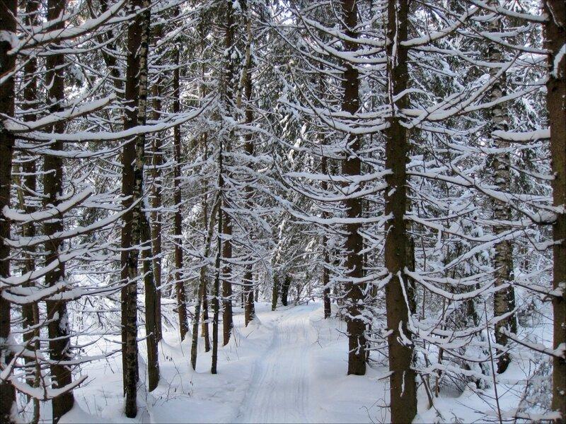 Дорога через ельник