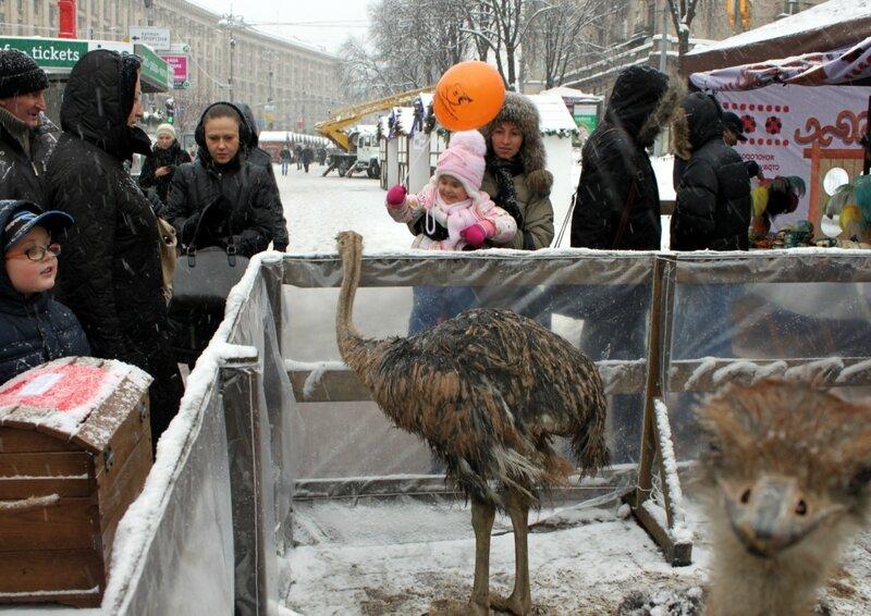 Посетители мини-зоопарка на Крещатике