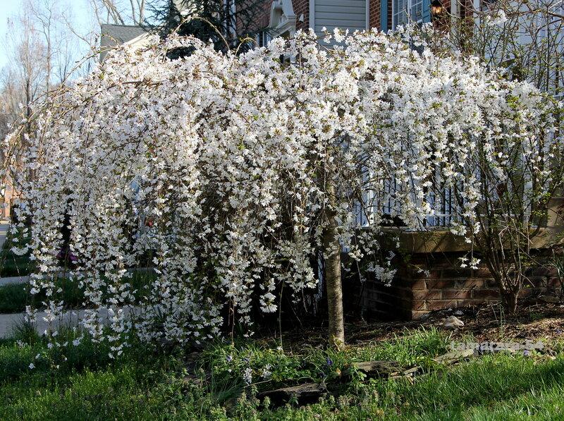Весна - невеста.