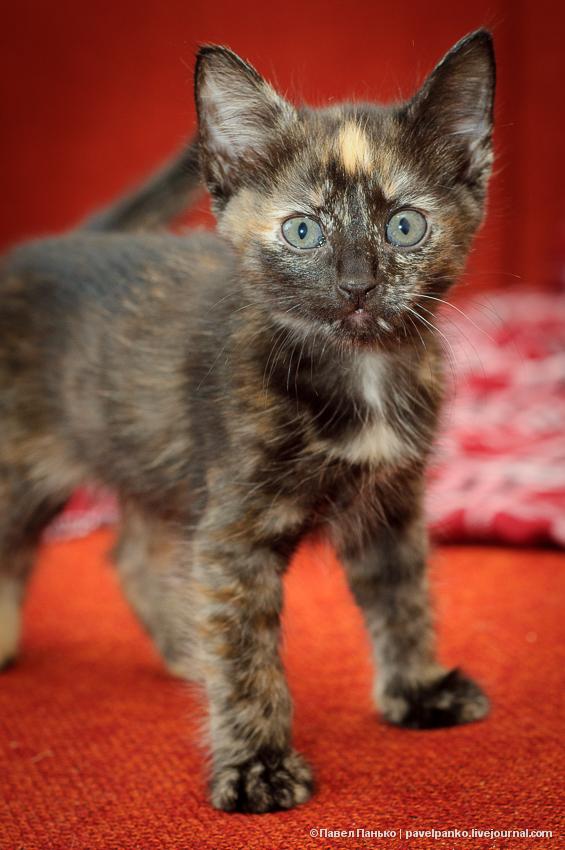 котэ кошка котенок котята животные pavelpanko