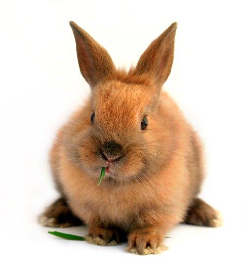 кролики, кормление кроликов, выращивание