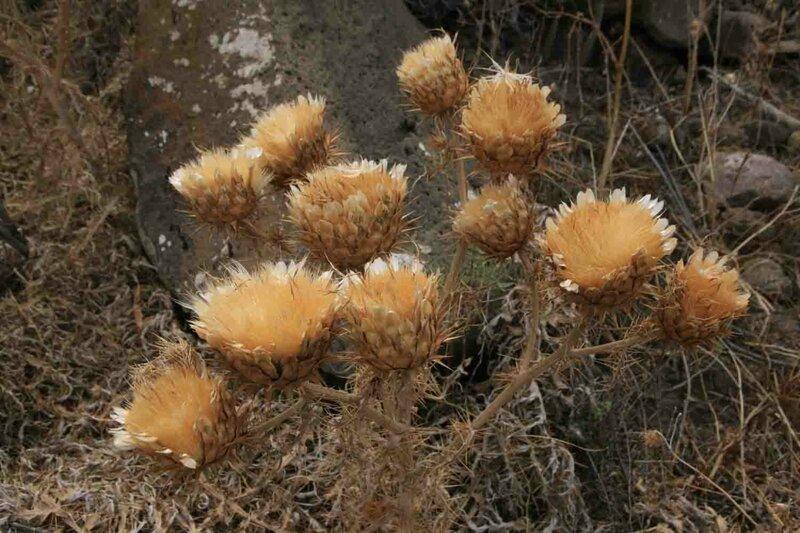 Константин Шульга, Тенерифе, растения 2