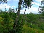 Лесной склон..JPG