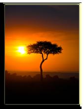 Кения. Масаи Мара. Фото Francois_Gagnon - Depositphotos