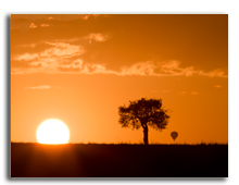 Кения. Масаи Мара. Masai mara sunrise with acacia tree and distant hot air balloon.Фото Atakhar - Depositphotos