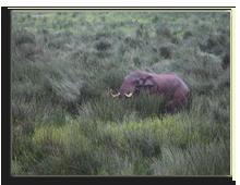 Кения. Национальный парк Абердар. Лодж The Ark. Фото А. Синицына