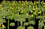 Lug_Grass_Flower (17).png