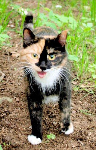 Весёлая кошка