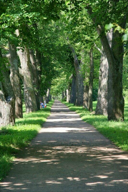 Екатерининский парк, аллея в пейзажной части парка