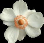 Sky_BK_Flower8.png