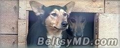 Стая собак в Перми искусала 6-ти летнего ребенка