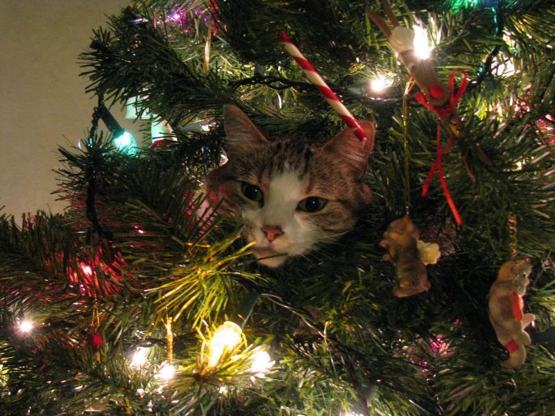 Коты на ёлке - фото 16