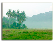 Малайзия. Лангкави. Фото pistolseven - shutterstock