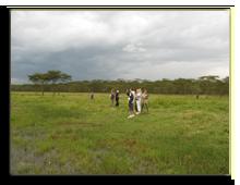 Кения. Озеро Накуру. Фото П. Аксенова
