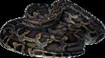 змеи  (9).png