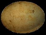 nb_vp_egg2.png