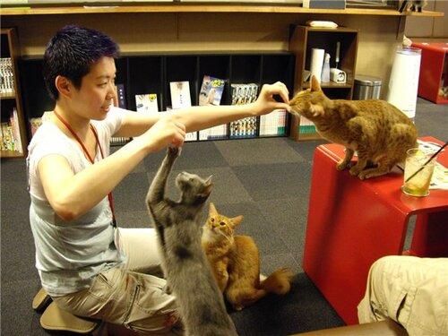 Япония: введены часы прогулок животным