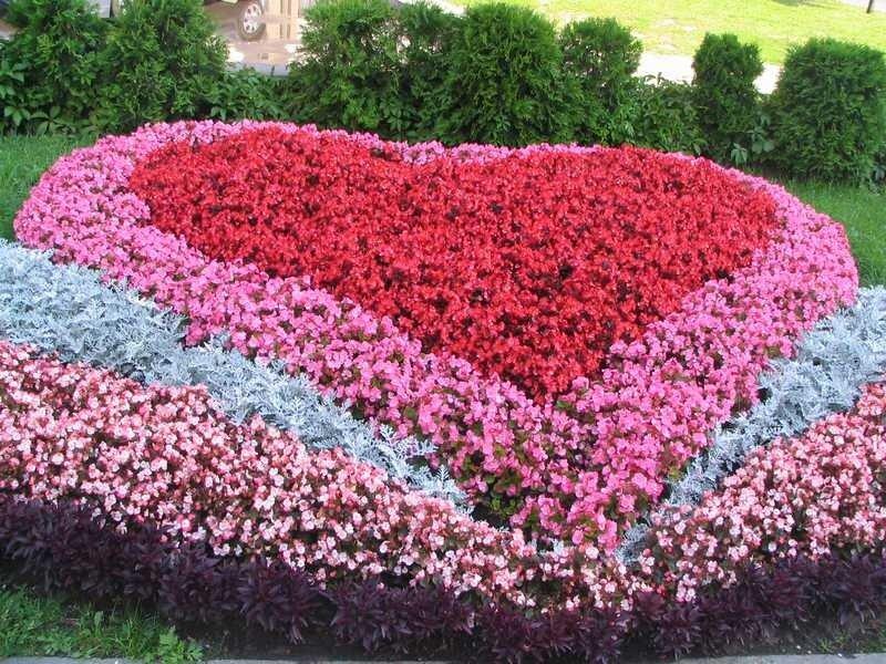 Цветы цветы цветы цветы цветы как