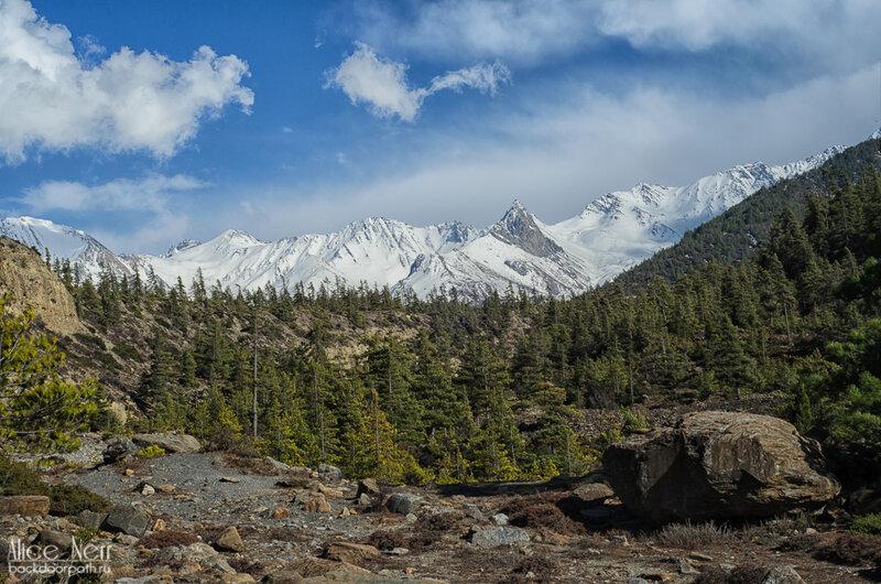 снежники и лес вокруг нашего палаточного лагеря, Гималаи, Непал