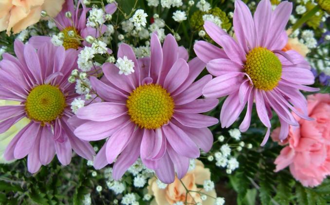 шпалери хризантеми