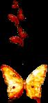 feli_l_butterfly embellie.png