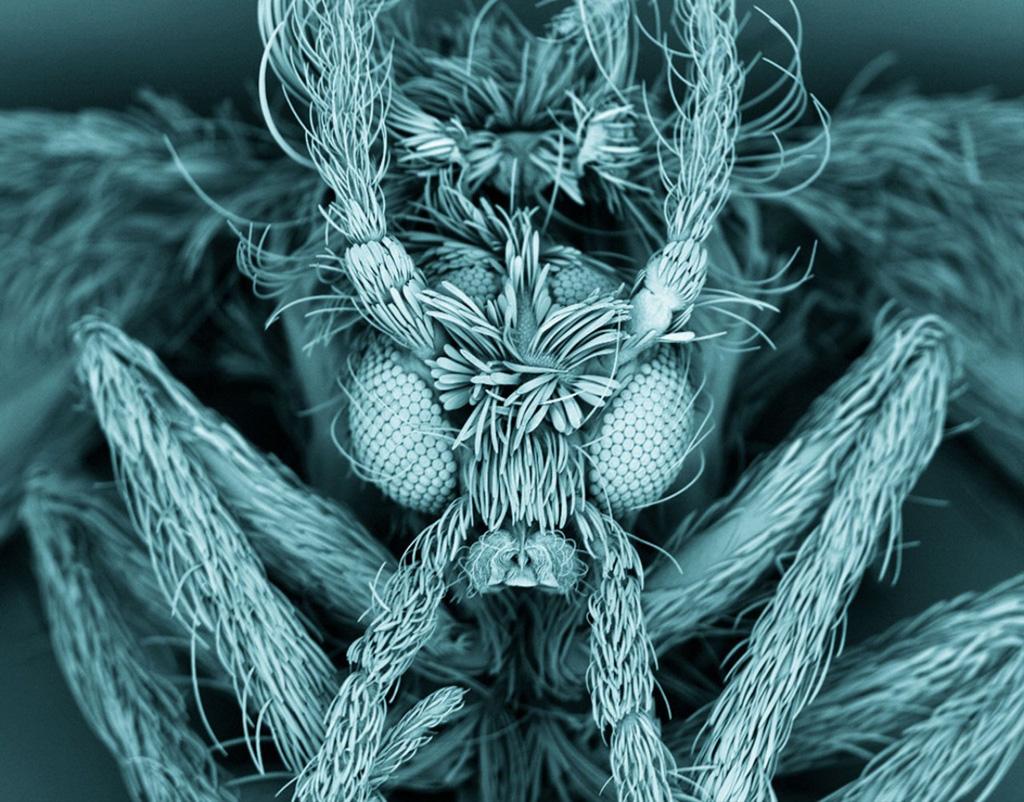 1. На этой растрово-электронной микрофотографии вы видите мотылька из семейства бабочниц. Личинки эт