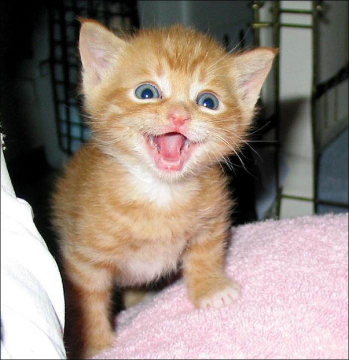 Улыбчивых котов пост