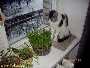 сидераты весной