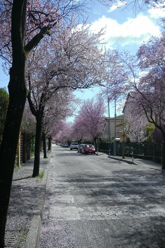 Padova-viaMonteGrappa-31.3.2013