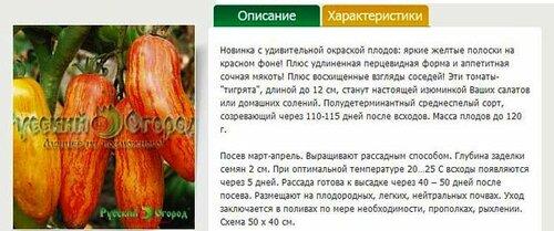 Томат Московский деликатес полосатый