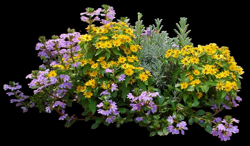 Полезные травы и их цвет