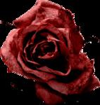 Lilas_btd_rose3.png