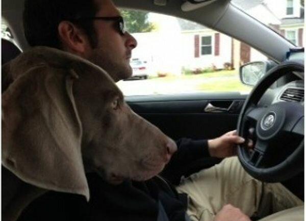 <br/>Муж за рулём...