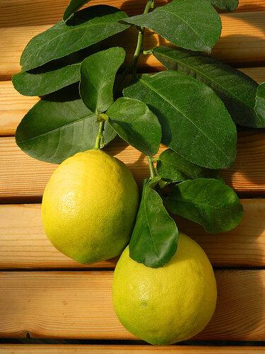 """Схема вышивки  """"Лимон в старом горшке """" ."""