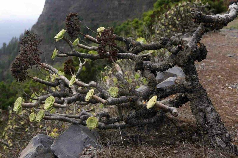 Константин Шульга, Тенерифе, растения 1