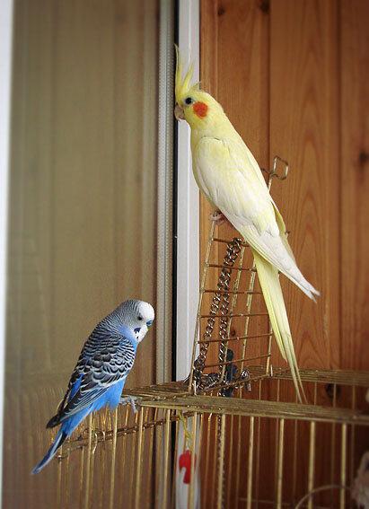 Гнездо для попугаев корелла