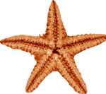 jsn_round4_mopb_starfish2.png