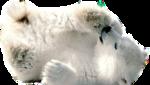 BEAR (HE IS SO DARN CUTE).png