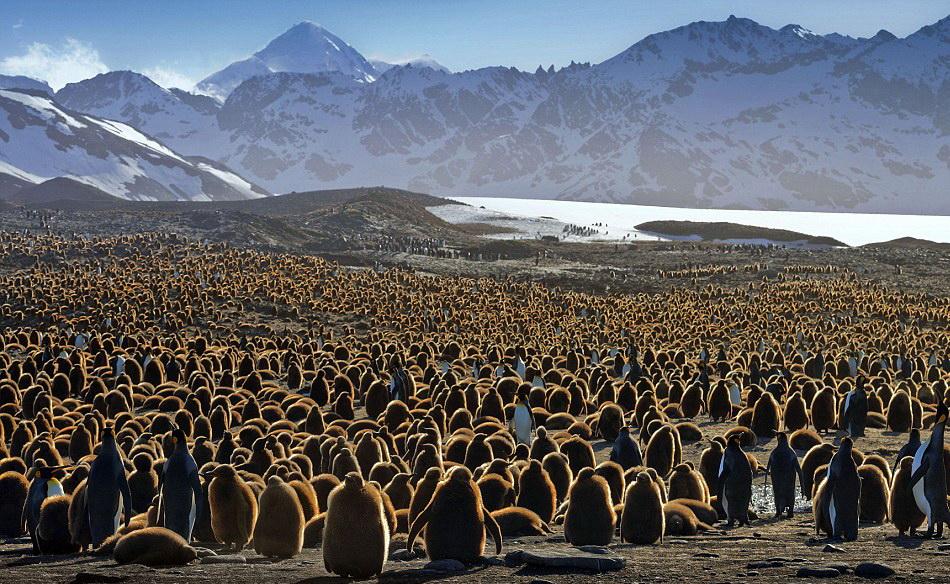 Занимательная пингвинология
