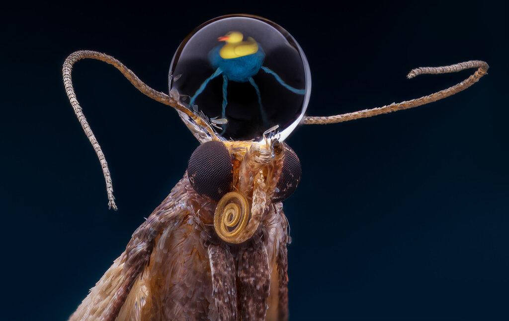 Желтая утка посредством мозгового паразита захватывает разум инопланетного монстра