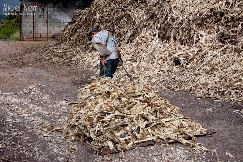 кучи тростниковой трухи для сожжения на сахарной фабрике