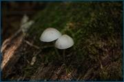 http://img-fotki.yandex.ru/get/4120/15842935.140/0_d092e_e7d59de0_orig.jpg